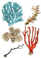 Coral Collage drawing