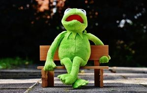 green toad sits on a wooden bench