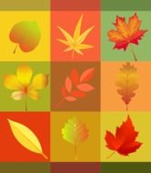 autumn leaves on colored squares