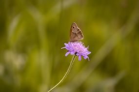 butterfly on a purple flower on a blurred green background