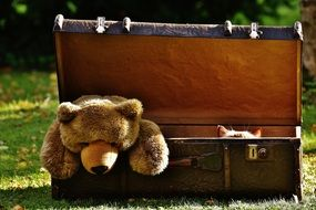 teddy bear lies in an old suitcase