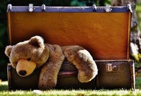 teddy bear lies in a suitcase