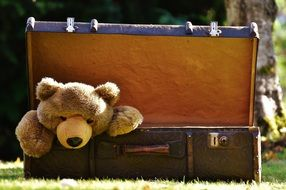 teddy bear in vintage suitcase