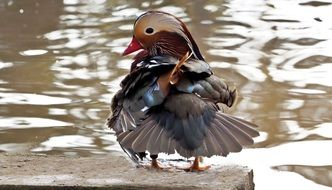 Mandarin duck on a background of a brilliant pond