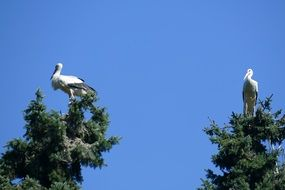 two storks on a tree
