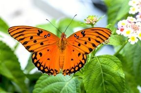 orange Butterfly at floral background