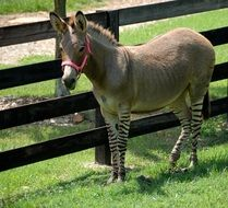 donkey stands near a wooden fence