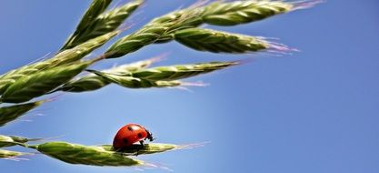 ladybug on a green leaf of a plant against a blue sky