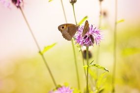 butterflies on a summer meadow
