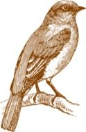 Vintage drawing of a bird
