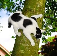 black and white cat on the tree