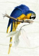 painted blue yellow parrot on a branch