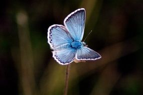 blue butterfly on a thin stem of a plant