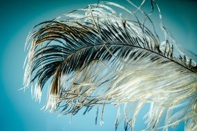 Strauss feather macro view