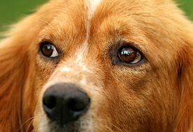 Dog with brown eyes