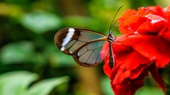 nice brown Butterfly