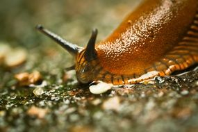 Closeup photo of Snail on a ground