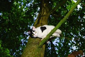 white cat sitting on a tree and curiously looking down