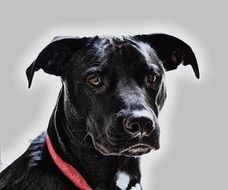 photo of a black dog with a red collar