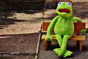 green toad sits on a wooden bench in the park