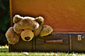 Soft toy in the shape of a bear in an old suitcase