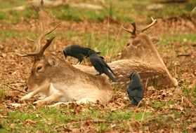 birds sitting on a deer