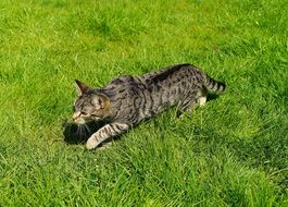 home young cat on green grass