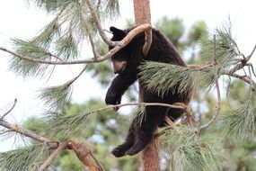 black teddy bear on a tree