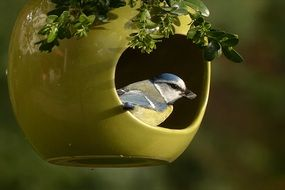tiny blue tit in the garden