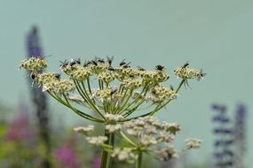 flies on a pointed flower