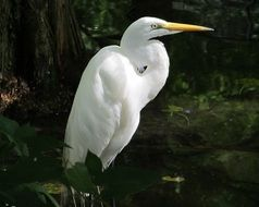 egret in a swamp