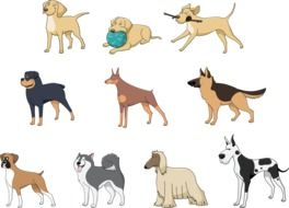 variety of dogs in graphic representation