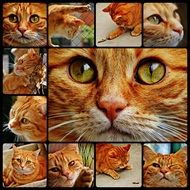 Cat Red Collage