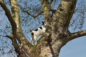 black-white cat on a tree