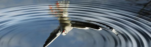 bird reflection in water