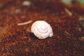 empty pink snail shell