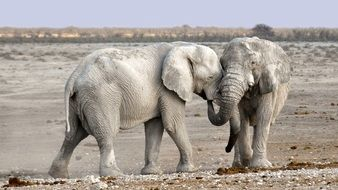 elephants in namibia national park