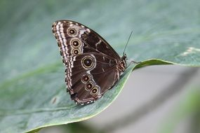 exotic brown butterfly on green foliage