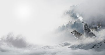 Wolves in Snow Landscape