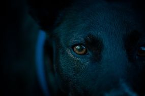 Dog dark Eye