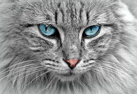 sky blue cat eyes