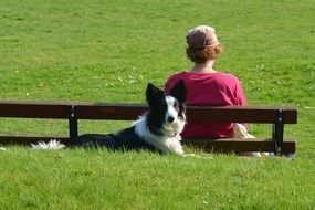 Border Collie lays on grass near person sitting on bench