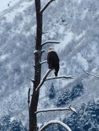 eagle in the snowy forest on the tree