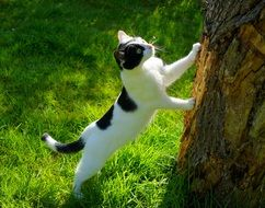 young Cat climbing tree trunk in Garden