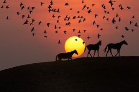 silhouettes of horses and birds at sunset