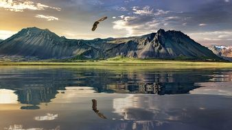 New Zealand Landscape with Eagle flying