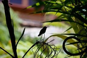 Hummingbird Silhouette on the branch