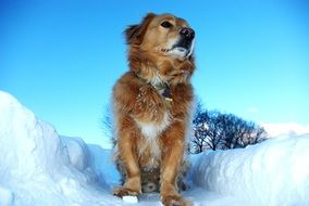 Picture of the dog on a snow