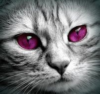 cat face with purple eyes