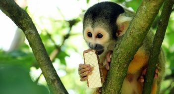 pretty Monkey eating sweets
